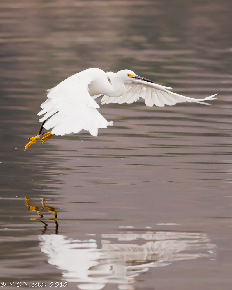 Photograph Take off by Pete  Pieslor on 500px