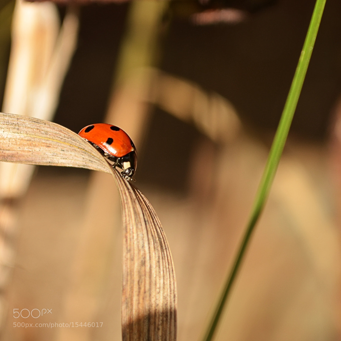 Photograph Untitled by H S | ÒuÔ on 500px