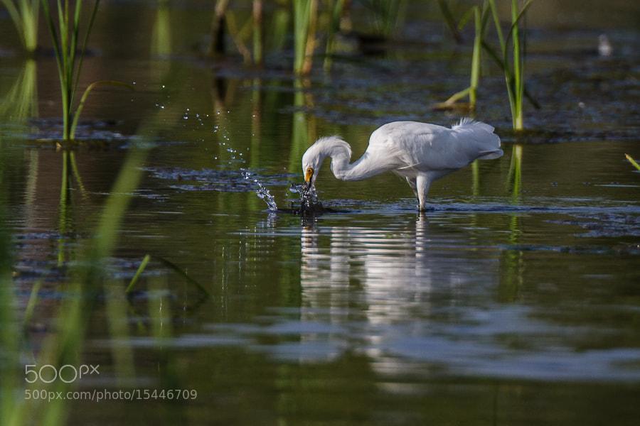 Photograph .: Splashing About :. by Jon Rista on 500px
