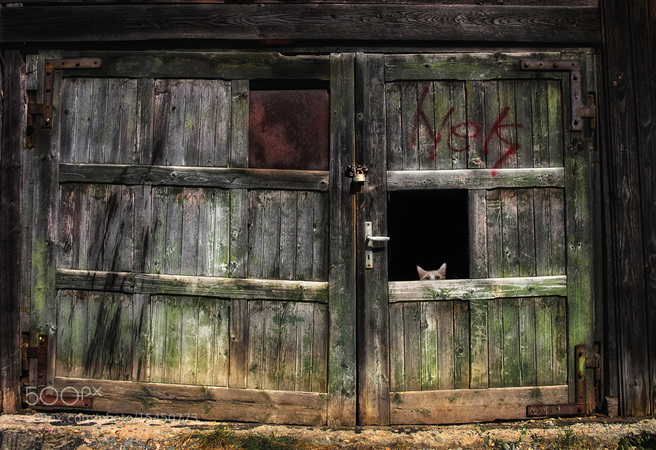 """Photograph """"Hide and peek""""  :-) by Osher Partovi on 500px"""