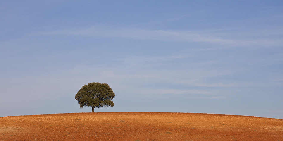 Photograph Simply Alentejo by Paulo Rocha on 500px