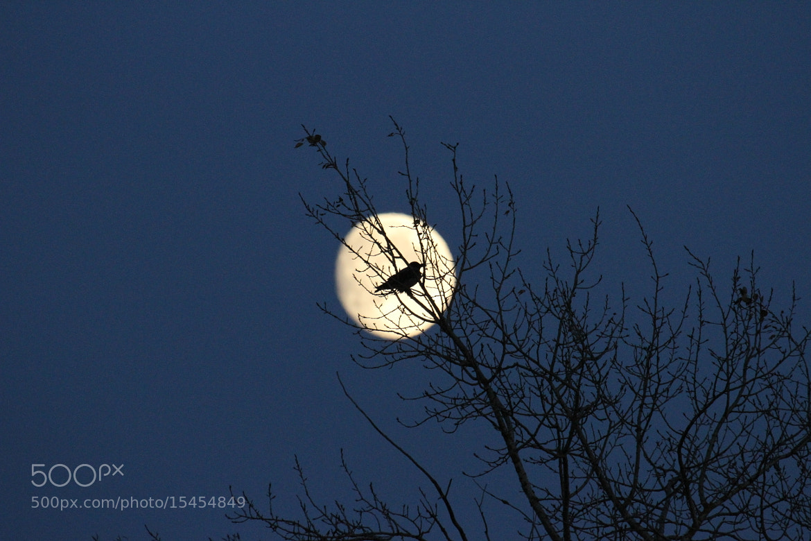 Photograph Moonbird by Mart Mättikas on 500px