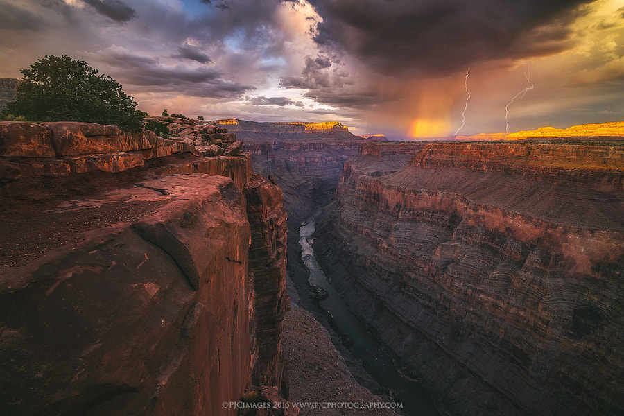 Golden Shower by Peter Coskun Nature Photography on 500px.com
