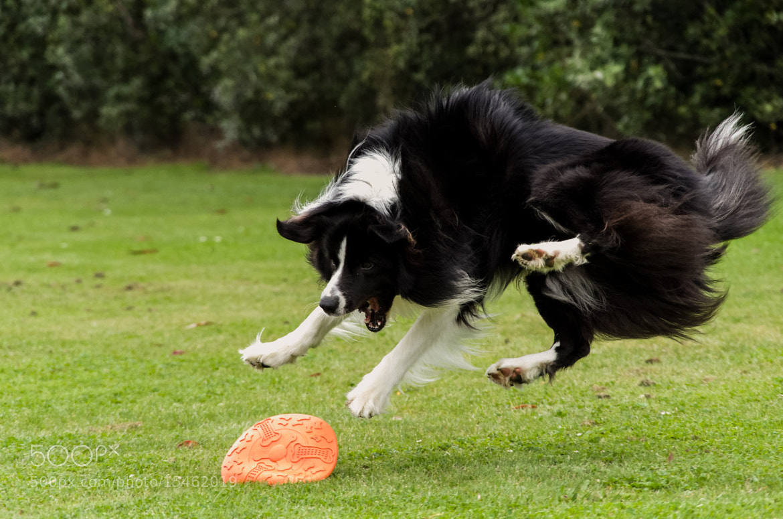 Photograph Ninja dog by Eli Shaul on 500px