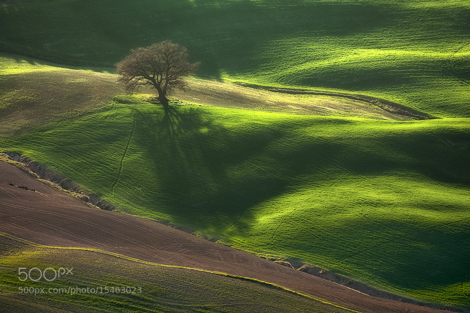 Photograph Tree by Boguslaw Strempel on 500px