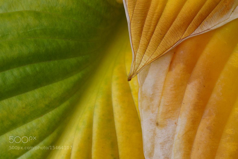 Photograph welcome yellow by Michaela Wendland on 500px