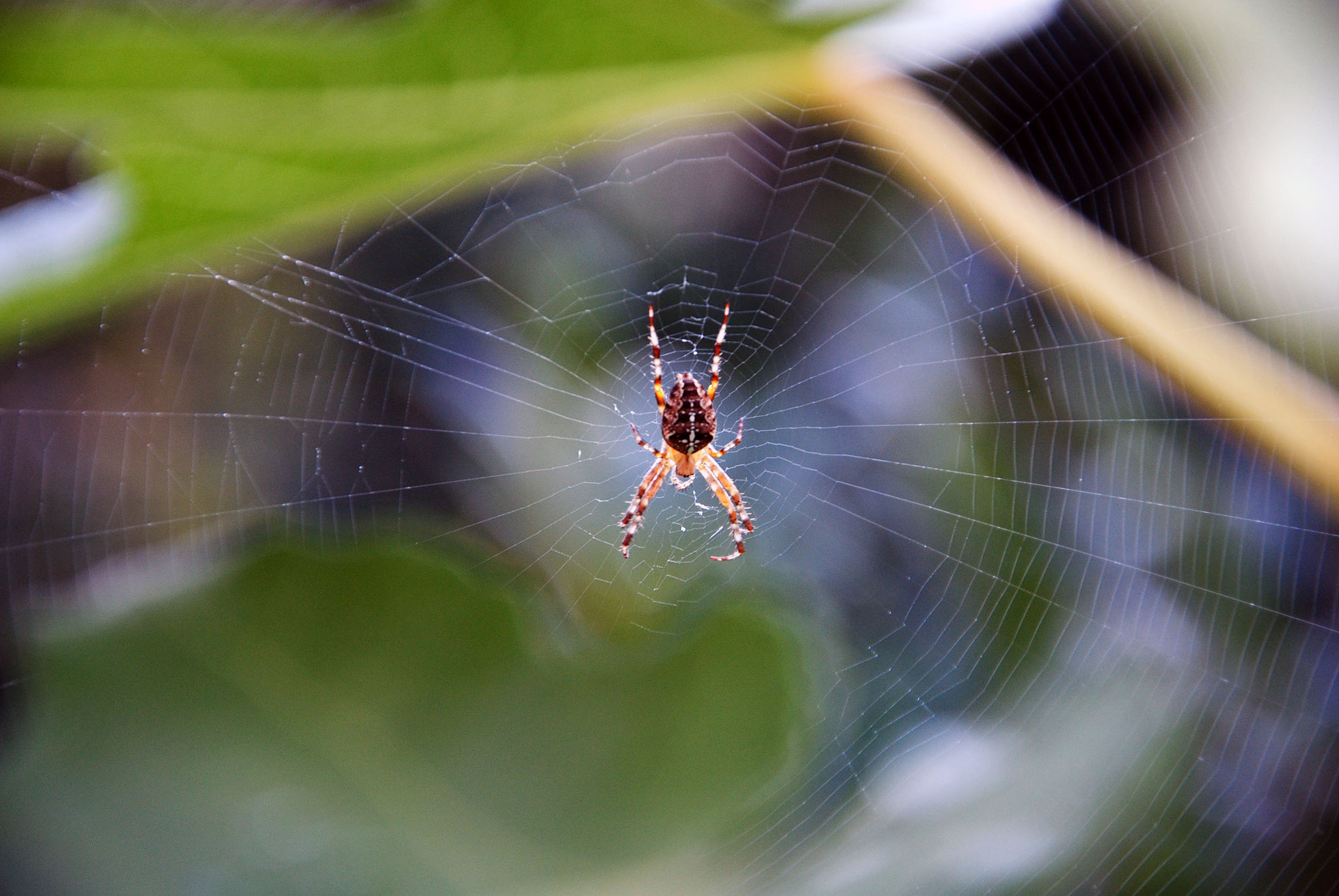 Photograph Spider's art by Letizia Soldano on 500px