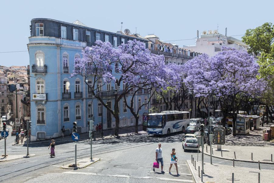 Avenida Dom Carlos