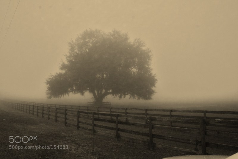 Photograph Foggy morning and tree by Susan Olsen on 500px