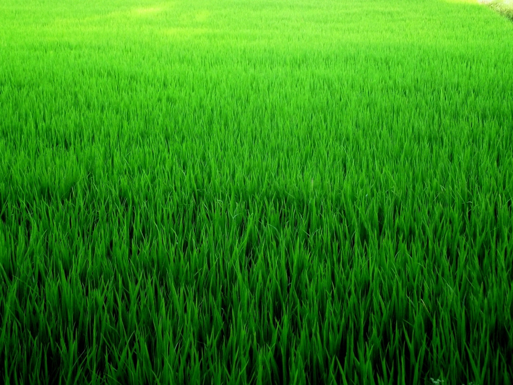 Photograph Pure Green Grass by Harshawardhan Deshpande on 500px