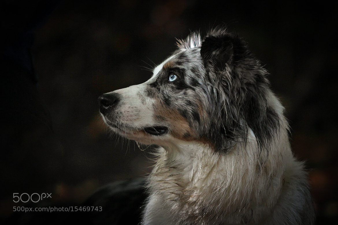 Photograph blue eyes ... by Mathias Ahrens on 500px