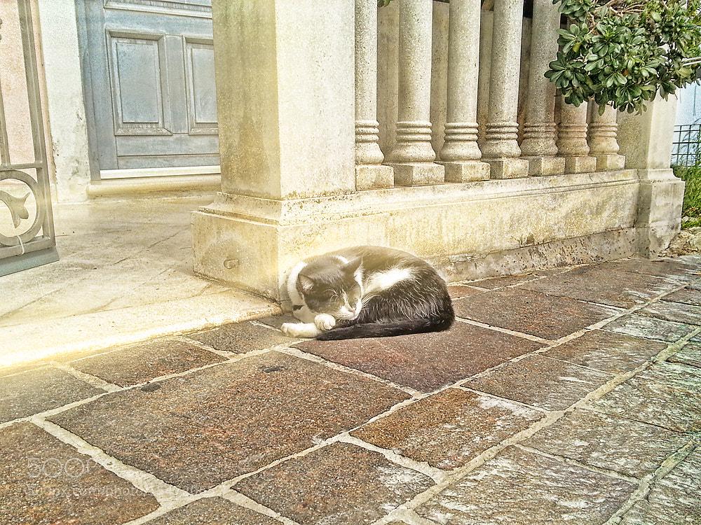Photograph Lazy Cat by Kayman Studio on 500px