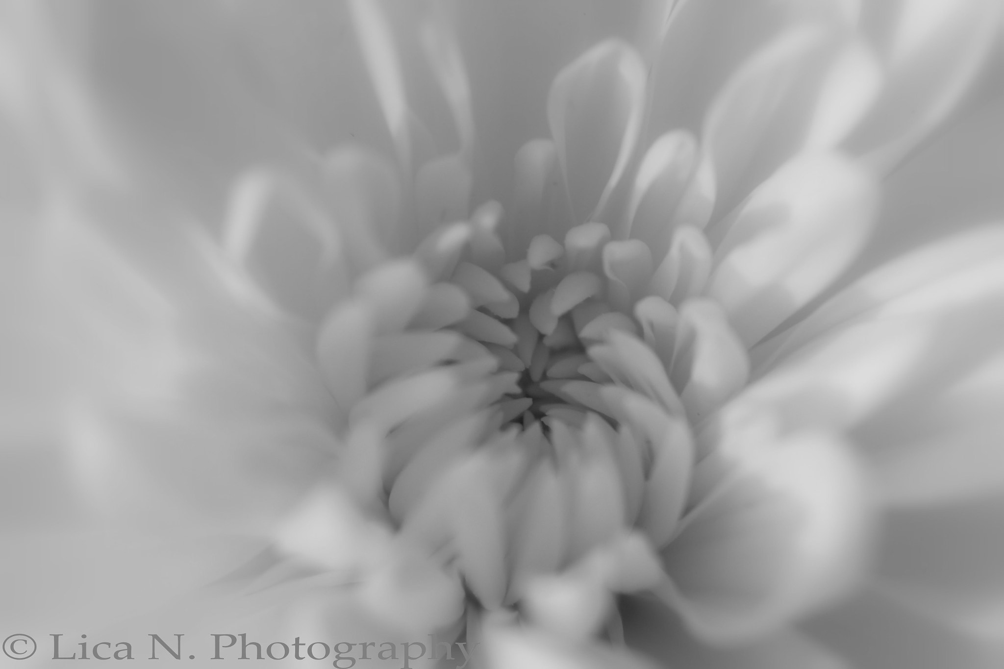 Photograph Softly II by Lica Nichols on 500px