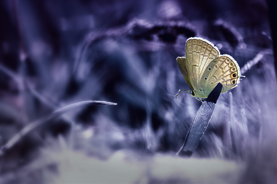 Photograph alone in dreamland by Angga Ra Putra on 500px