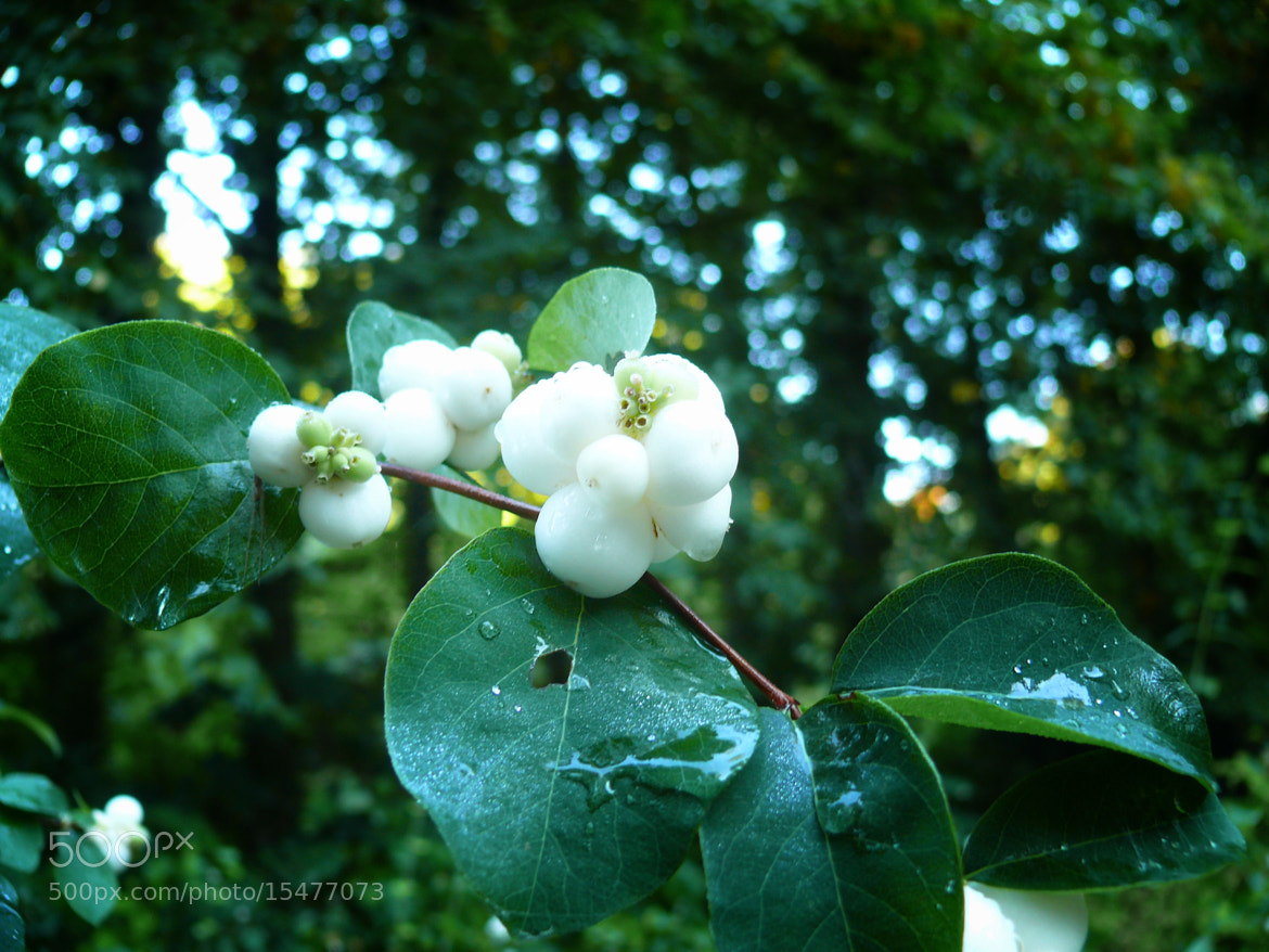 Photograph DELICATE WHITE BALLS by the frie on 500px