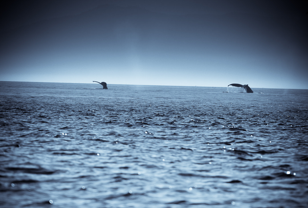 Photograph Dive by Philipp Wedel on 500px