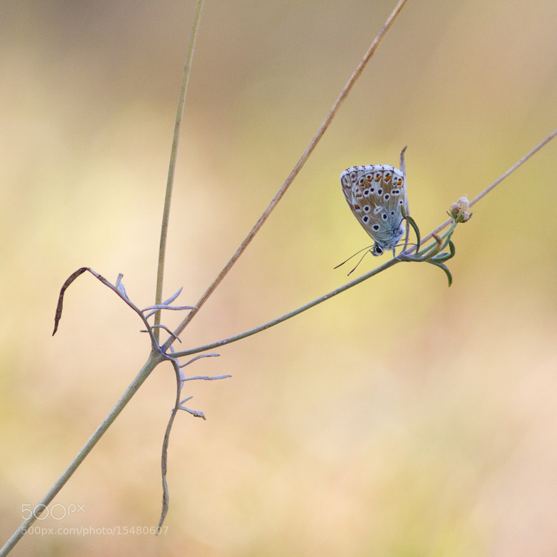 Photograph Pastel of Argus by Benjamine Scalvenzi on 500px