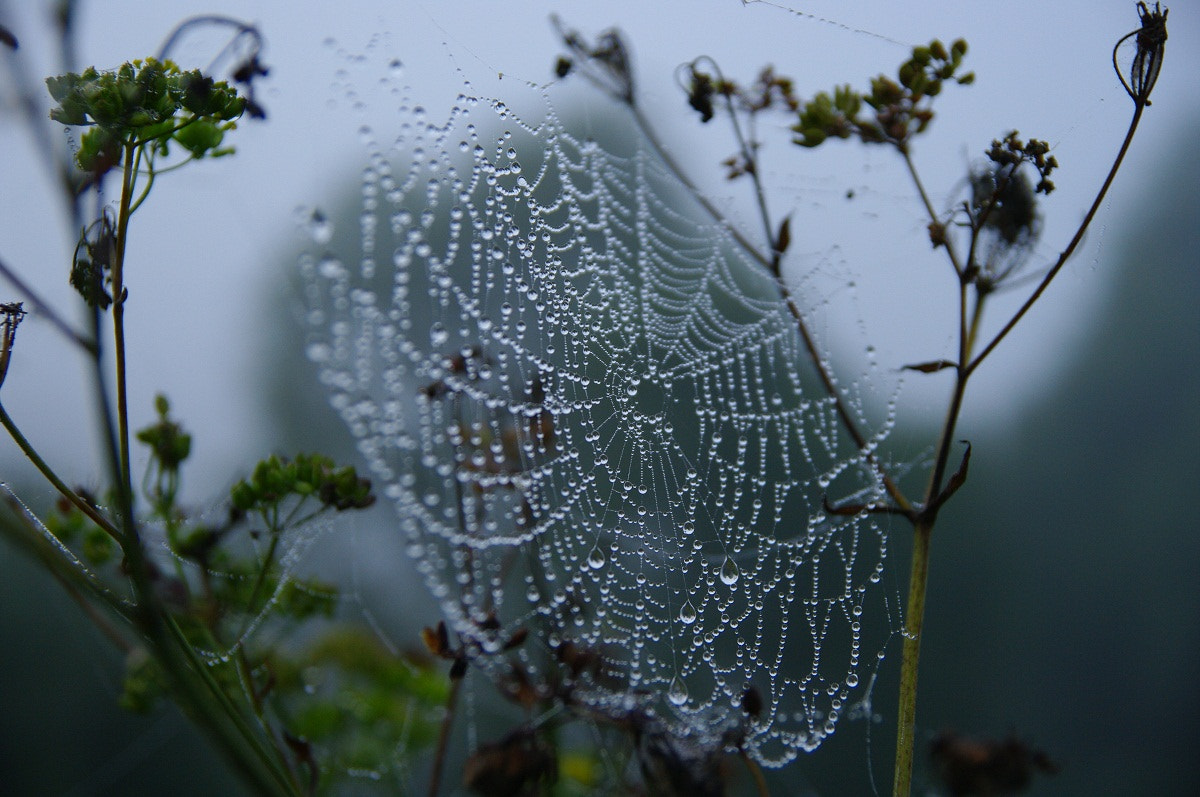 Photograph Early dew by I'm Olga on 500px