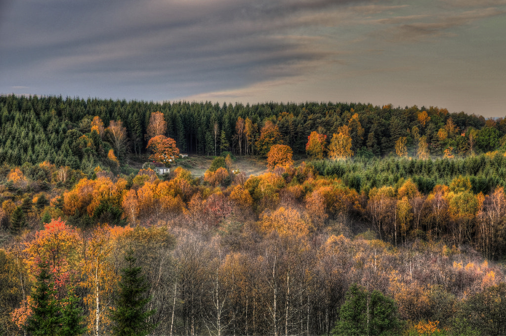 Photograph A little house in nature... by Almqvist Photo on 500px