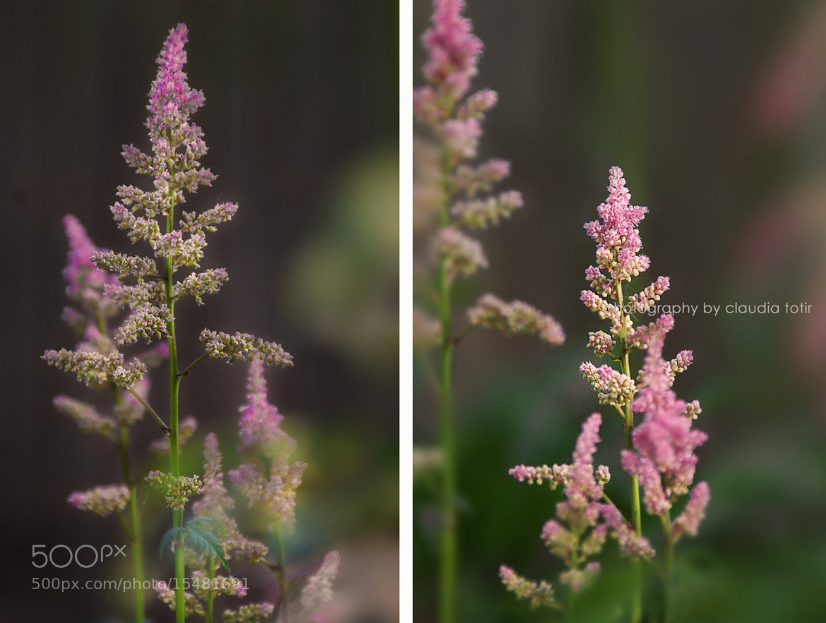 Photograph Soft summer colors by Claudia Totir on 500px