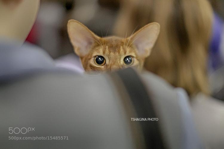 Photograph Eyes by Tatyana Shagina on 500px