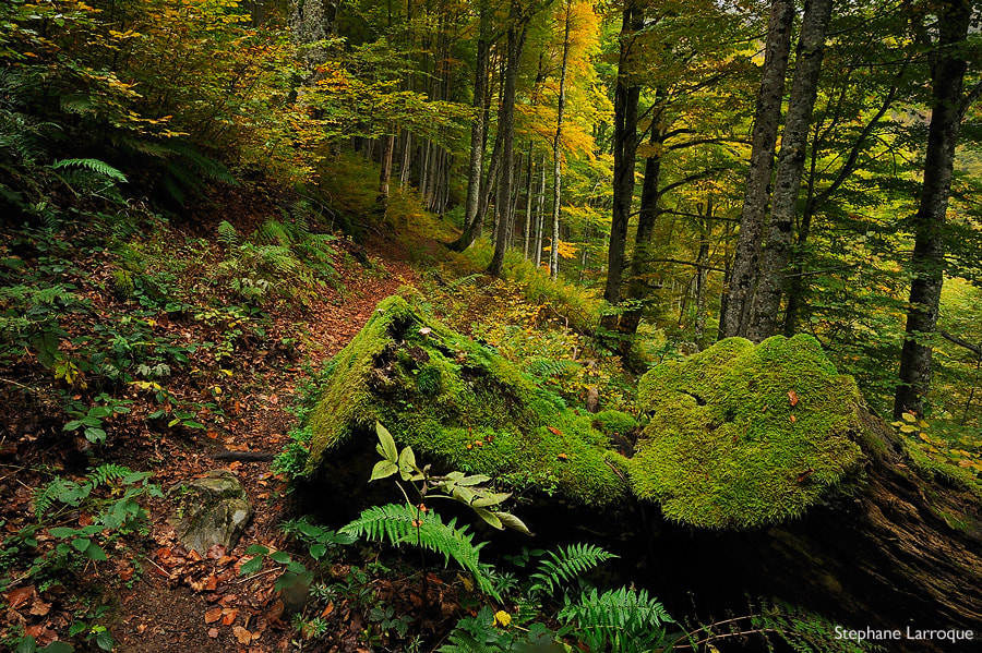 Photograph Pyrenean forest by stephane larroque on 500px