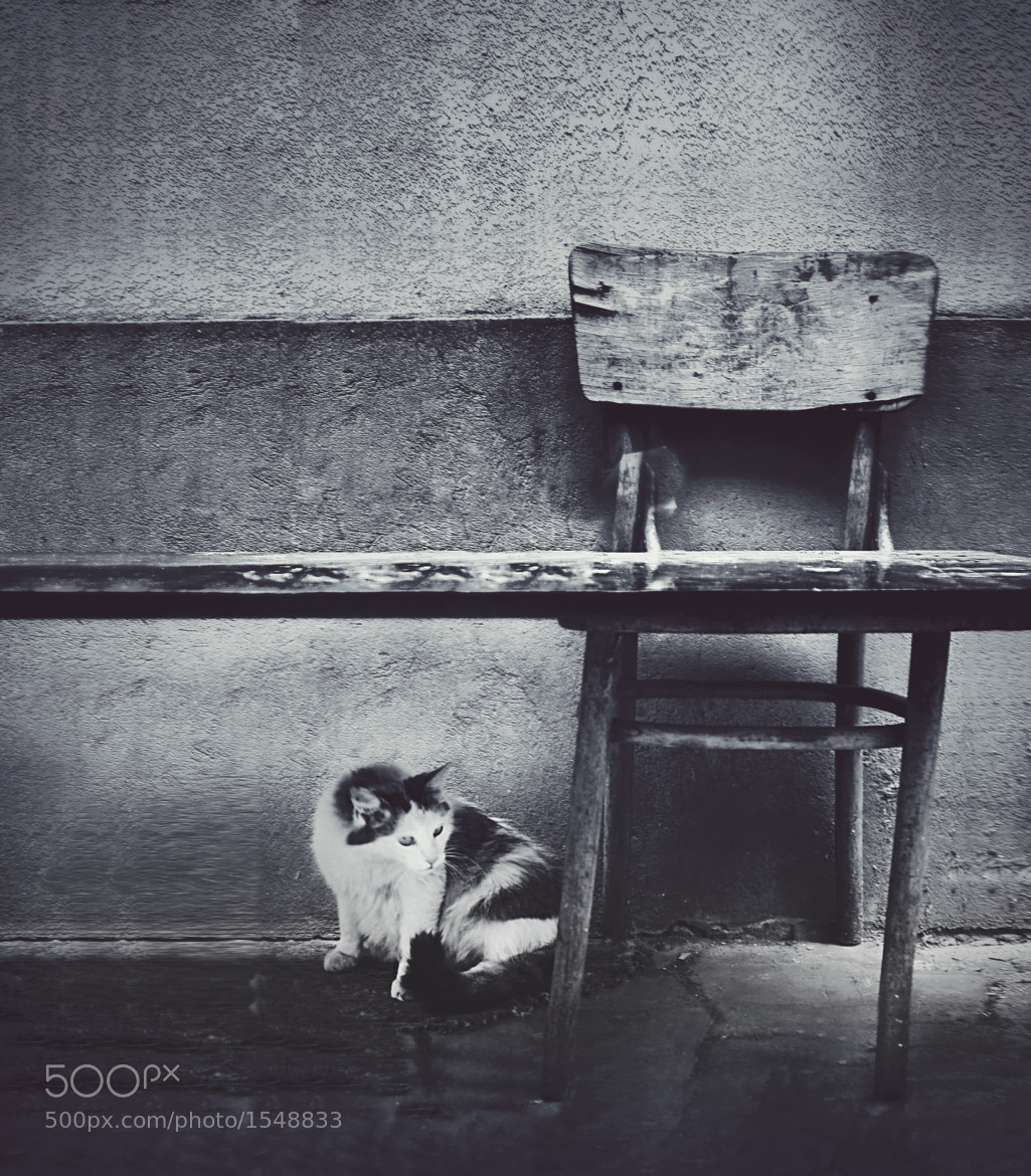 Photograph cat-chair-door by Darie C` on 500px
