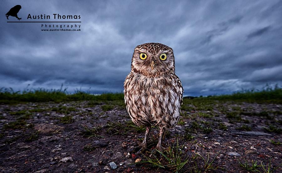 A funky Little Owl...