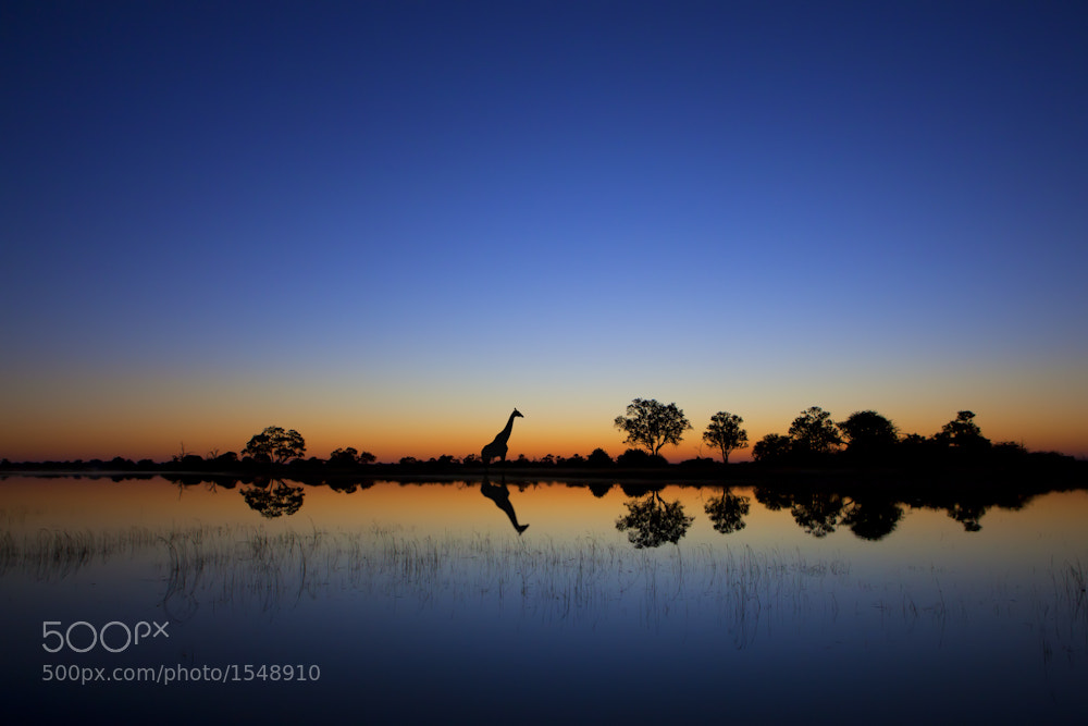 Photograph Okavango by Mario Moreno on 500px