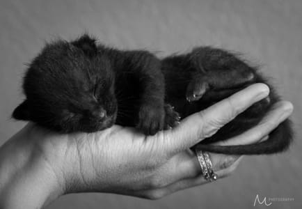 Eight Days Old by Klassy Goldberg on 500px