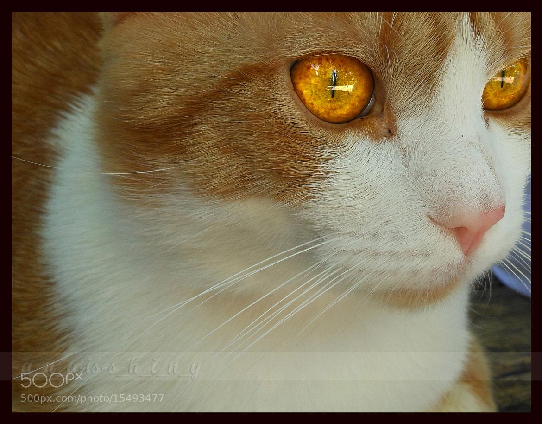 Photograph >>>inside those eyes<<< by Ana Mitić on 500px