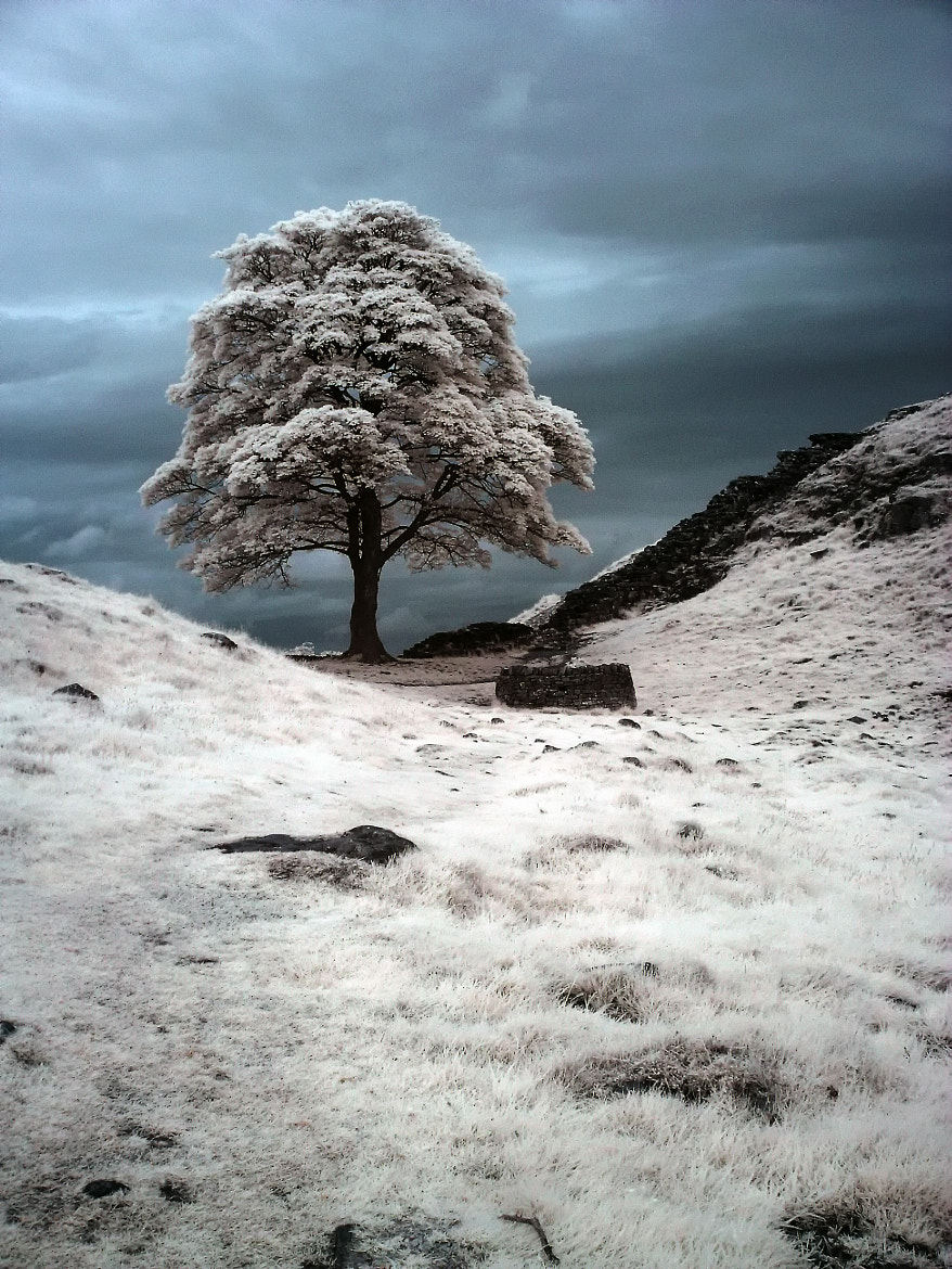 Photograph Sycamore Gap Infra Red by Phil Whittaker on 500px