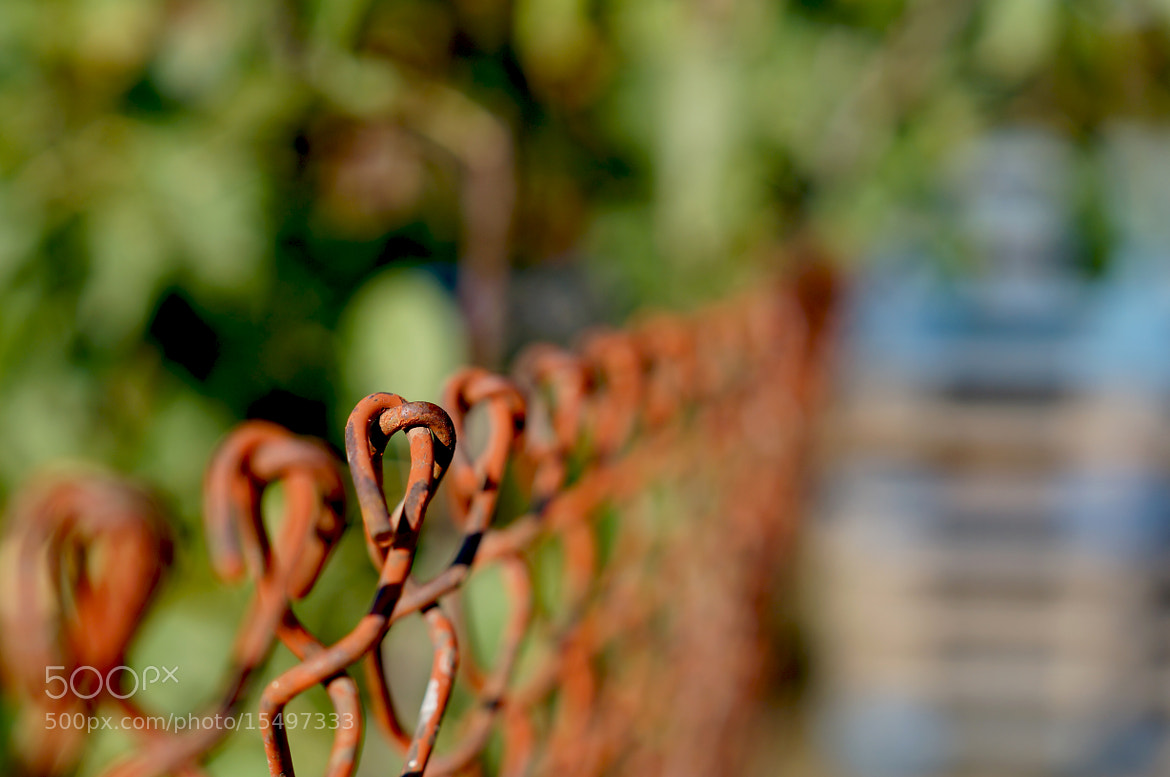 Photograph fence by Krasimir Hintolarski on 500px