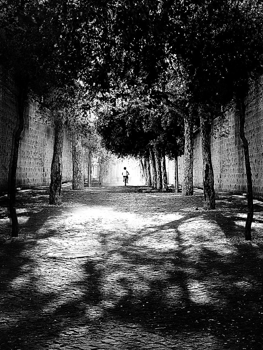 Photograph Urban forest by Miguel Mascarenhas on 500px