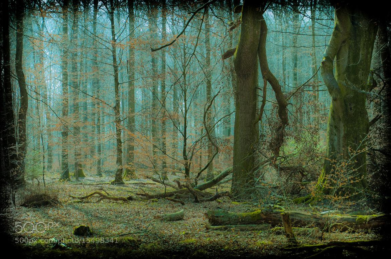 Photograph Untitled by Hartmut Haerer on 500px