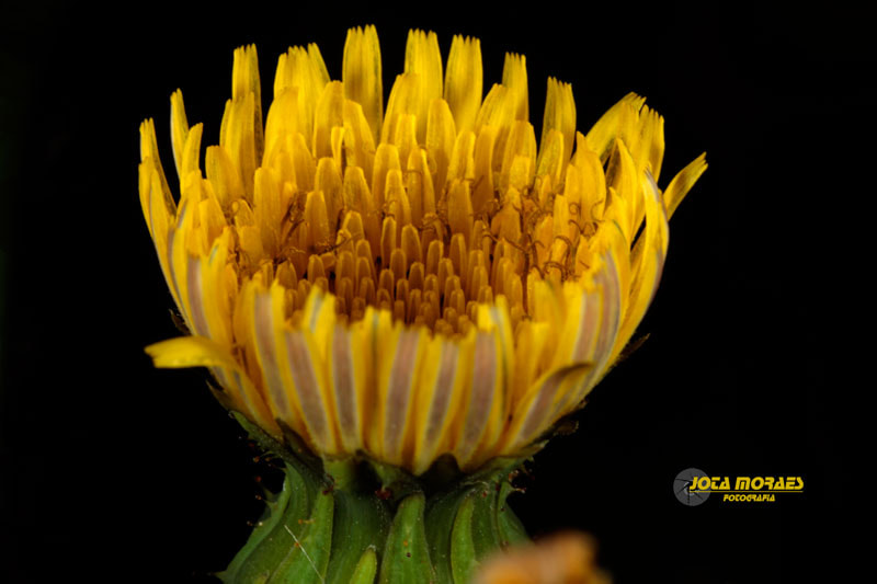 Photograph Calice gold by jota moraes on 500px
