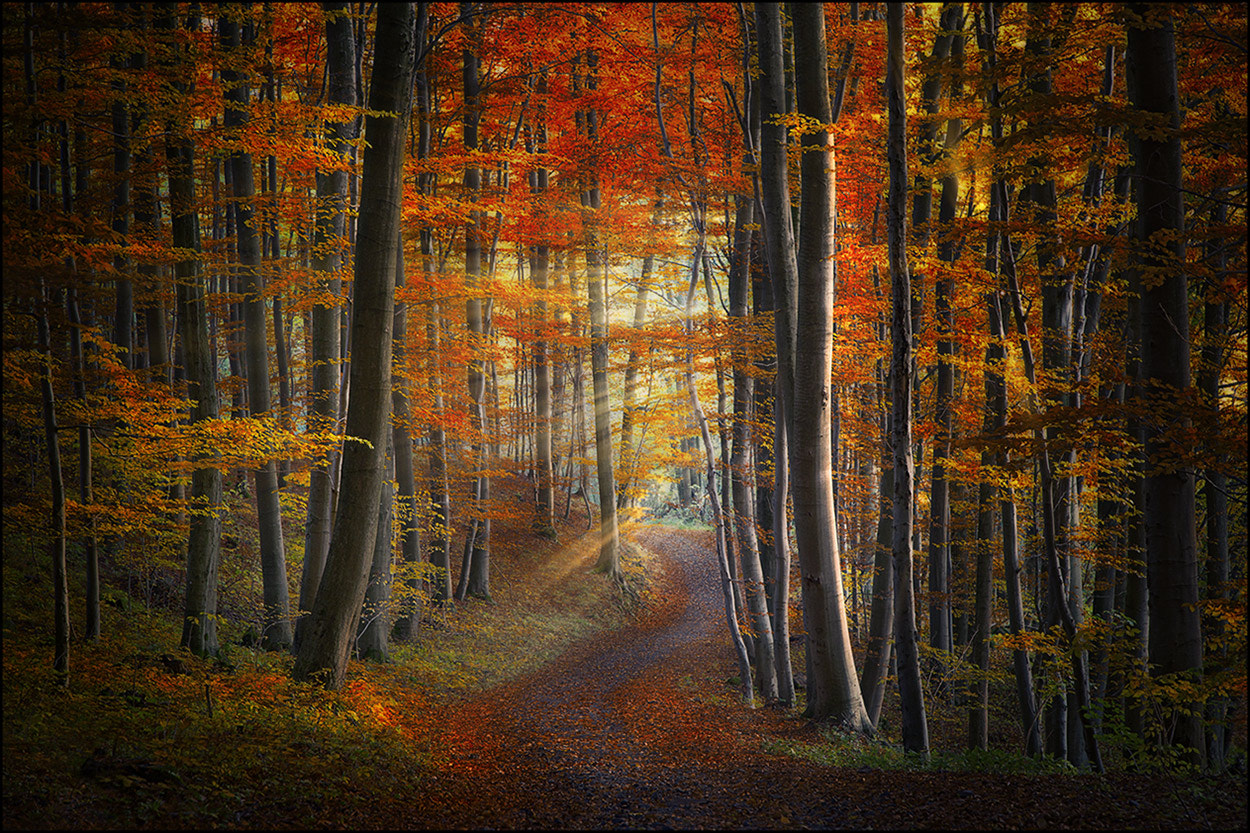 Photograph Autumn Forest by Birgit Pittelkow on 500px