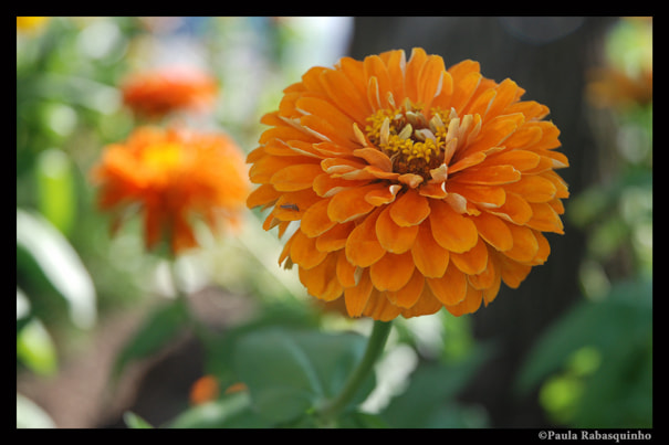 Photograph Orange by Paula Rabasquinho on 500px