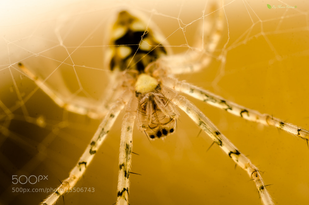 Photograph spider model by Marco Freitas on 500px
