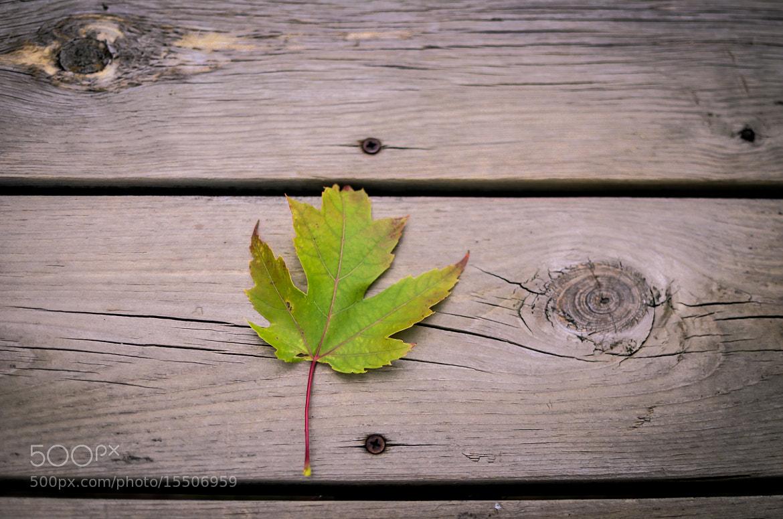 Photograph Fall -2 by Sandeep P on 500px
