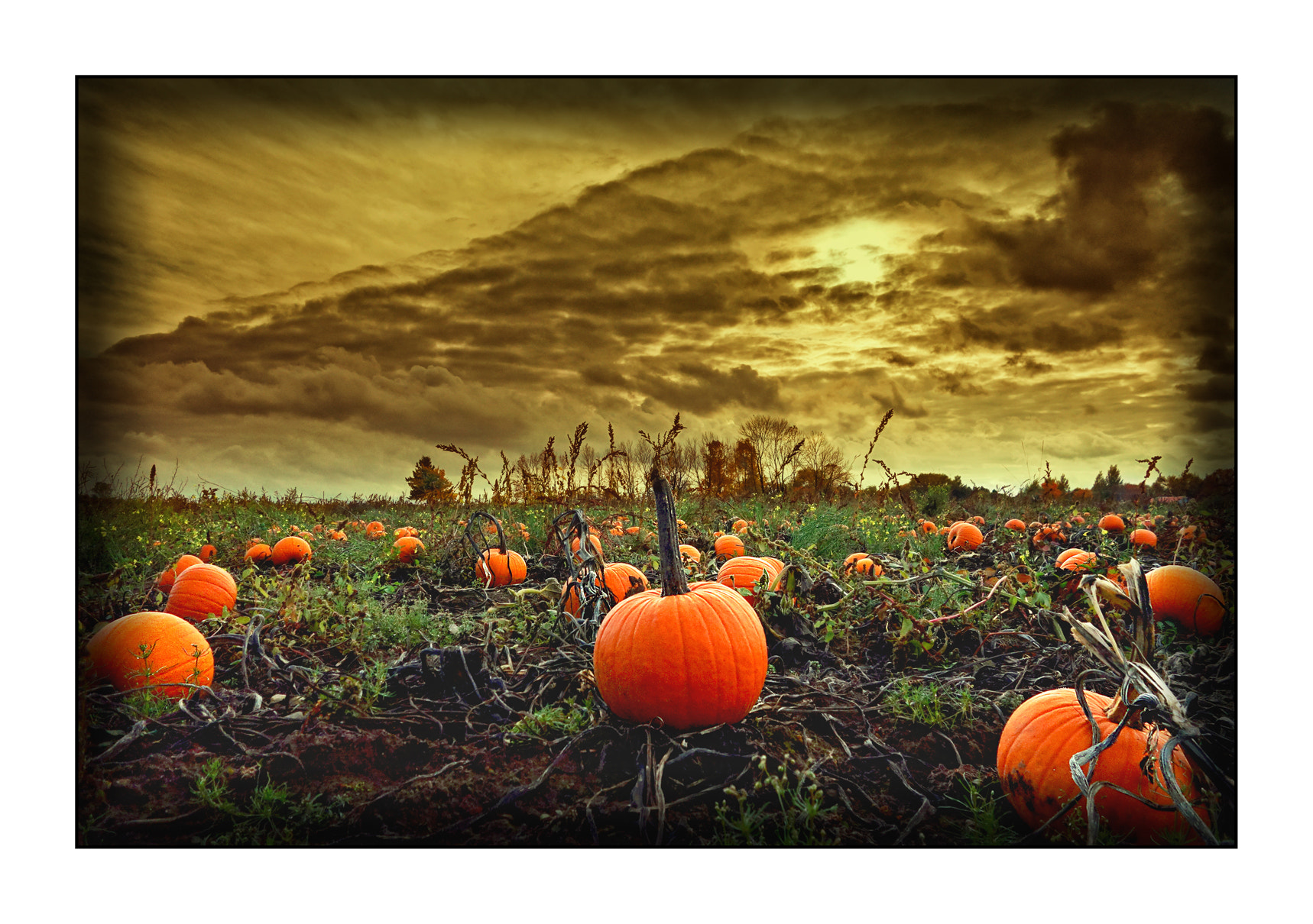 Photograph SCARY by Roger Eamer on 500px
