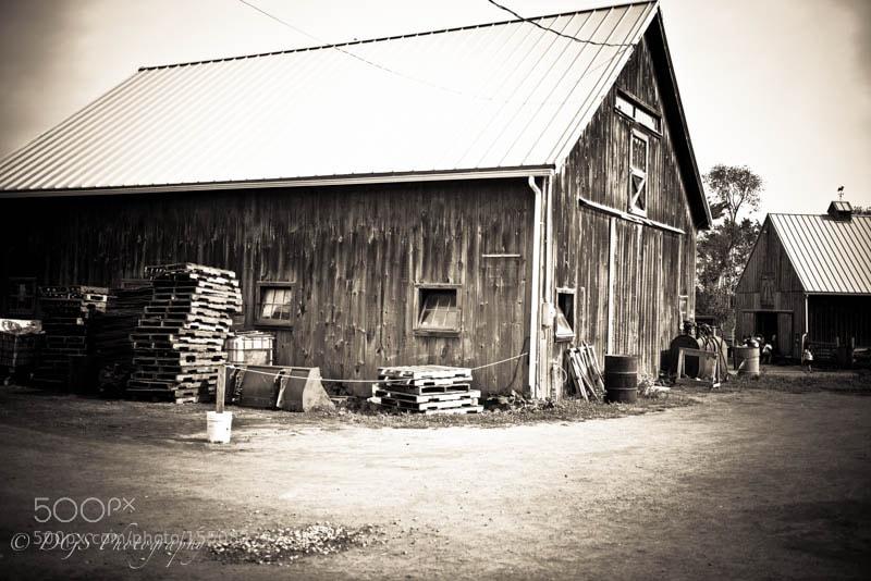 On The Farm Again....