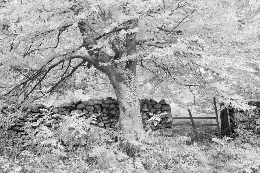 The woods by Derwentwater