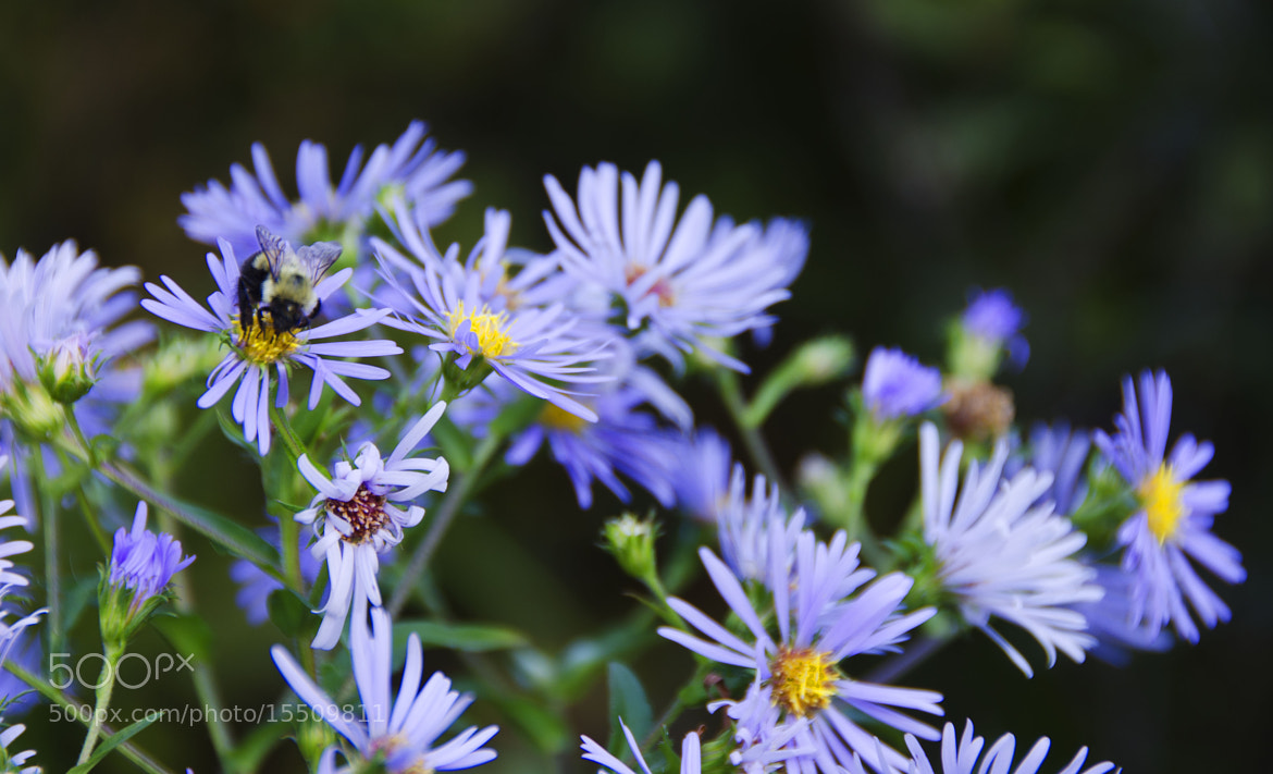 Photograph Pollinating  by Stephanie Kirby on 500px