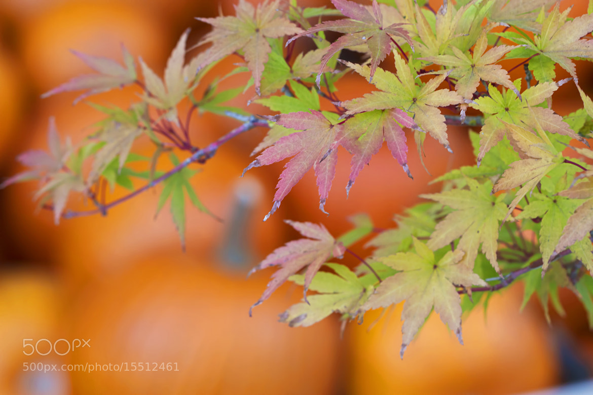 Photograph Listening to Autumn's Silence by Renae Smith on 500px