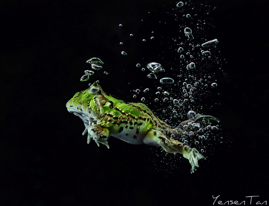 Swim by YensenTan Photography (TantoYensen) on 500px.com