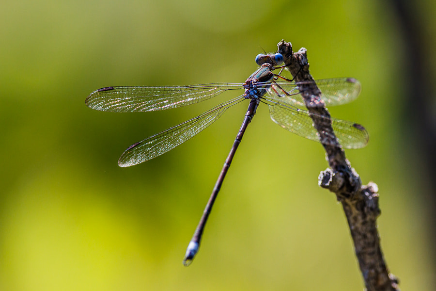 Photograph .: Delicate Damsel :. by Jon Rista on 500px