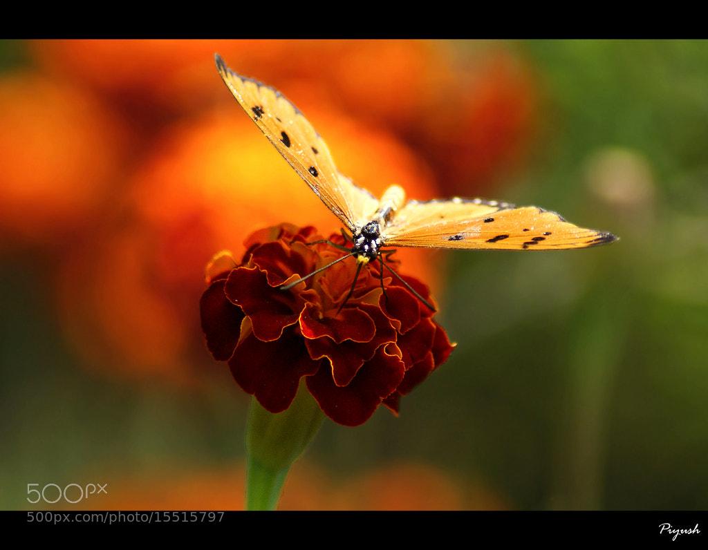 Photograph Tasty Nectar by Piyush Thacker on 500px