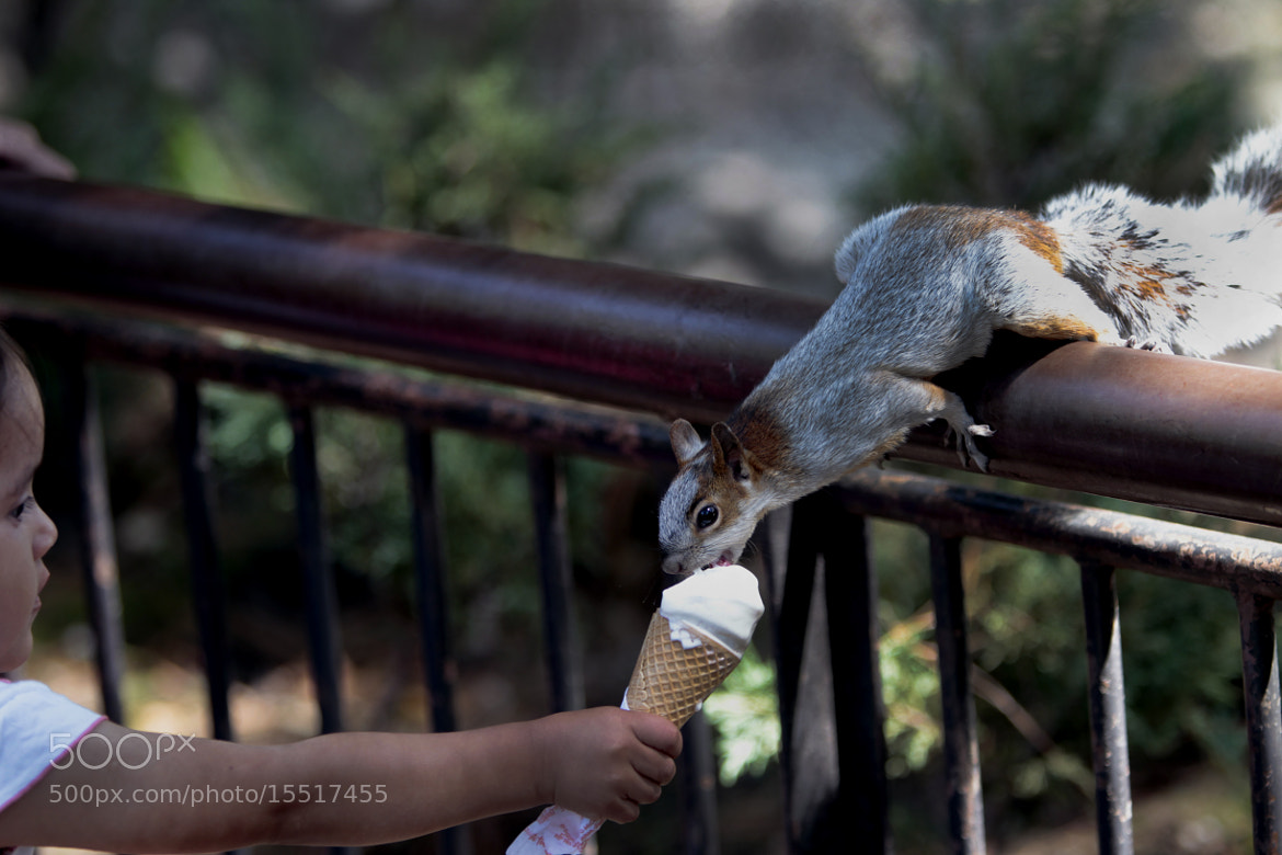 Photograph Squirrel and girl sharing an ice cream by Cristobal Garciaferro Rubio on 500px