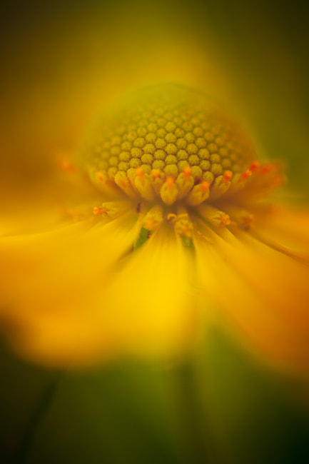 Photograph Glowing by Andrea  Gulickx on 500px
